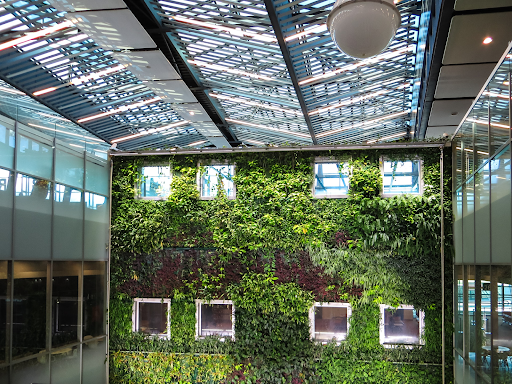 Green wall with windows inside another building